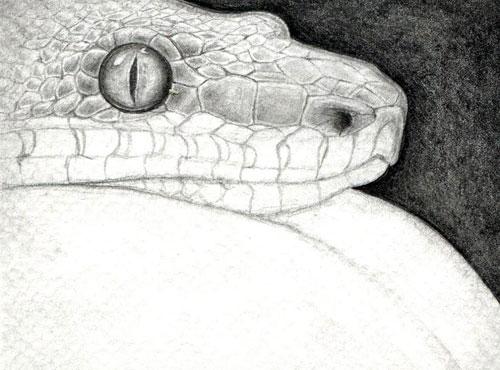 Рисуем змею карандашом