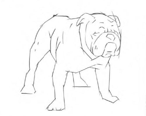 Как нарисовать бульдога