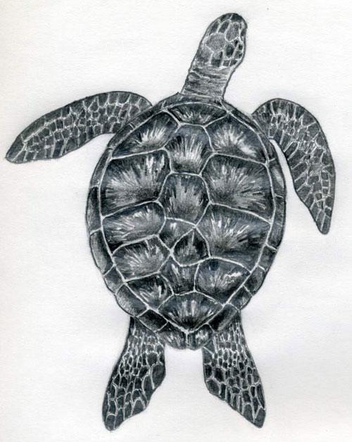 Как нарисовать черепаху