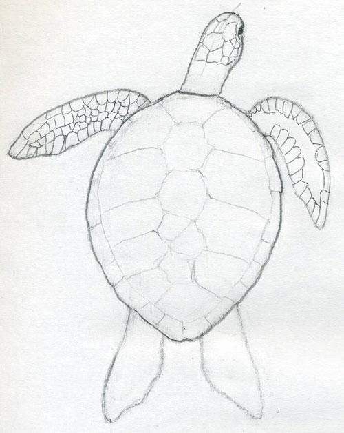 черепаха карандашом картинки