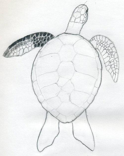 Черепаха рисунки