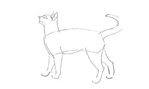 Как нарисовать кошку поэтапно сиамскую кошку