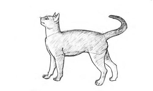 Как нарисовать кошку
