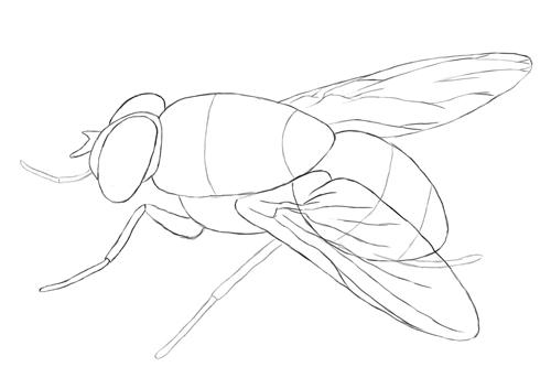Как нарисовать муху?