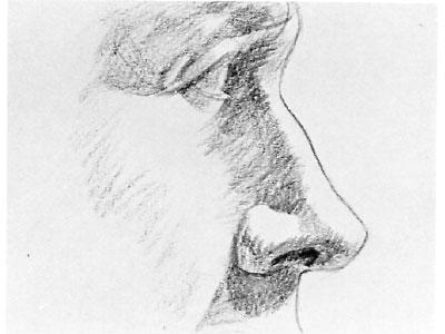 как рисовать нос человека карандашом: