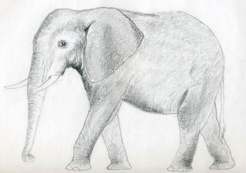 Как нарисовать слона