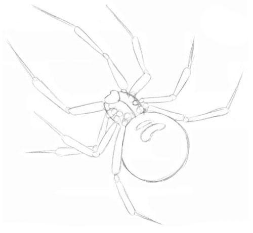 как нарисовать паука при